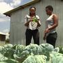 Lao động trẻ - Tương lai của nông nghiệp