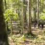 Phong tục giữ rừng của người Hà Nhì ở Y Tý, Lào Cai