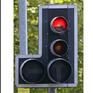 Phần Lan: Chim cú làm gián đoạn camera giao thông