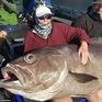 Nữ du khách bất ngờ câu được cá khổng lồ, to như ghế sofa ở Australia