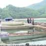 Xây dựng mô hình nuôi thủy sản an toàn