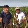 Campuchia tìm hiểu giống điều Việt Nam để phát triển diện tích trồng mới