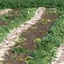 Tiến tới chấm dứt tình trạng ế thừa nông sản