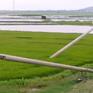 Khánh Hòa: 4 tháng sau bão số 12, hàng loạt trụ điện gãy đổ vẫn ngổn ngang