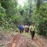 Lập chốt bảo vệ rừng, phòng chống cháy rừng tại Bình Định