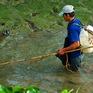 Hai thanh niên tử vong khi dùng điện chích cá ở suối Cam Ly