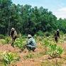 Chuyển đổi mô hình trồng rừng để đảm bảo nguồn gỗ cho chế biến