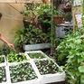 Hướng dẫn phương pháp đơn giản trồng rau sạch tại nhà
