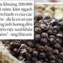 """""""Cà phê pin"""" được trộn lẫn với hồ tiêu nhằm tăng trọng lượng"""