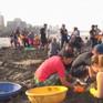 Các ngôi sao điện ảnh Ấn Độ dọn dẹp bãi biển