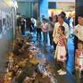 Lượng khách du lịch đến TP.HCM tham quan di sản tăng mạnh