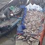 Làng bè La Ngà: Cá chết trắng mặt sông, người nuôi ngậm ngùi bán rẻ làm phân bón