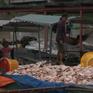 Cá chết hàng loạt sau 1 đêm, người dân Đồng Nai điêu đứng