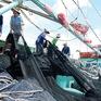 ĐBSCL đối mặt tình trạng thiếu ngư phủ
