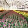 Lâm Đồng tiếp cận mô hình sản xuất nông nghiệp thông minh