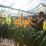 Tháo gỡ bản quyền giống hoa