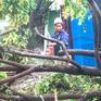 TP.HCM: Nhà tốc mái, cây đổ sau giông lốc