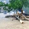 Nhiều bang tại Mỹ ban bố tình trạng khẩn cấp vì bão Alberto