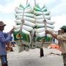 Giá xuất khẩu gạo cao nhất trong 4 năm