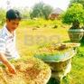 Gia tăng trộm cắp ở vùng nông thôn Bình Định