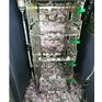Chuột cắn nát hơn 18.000 USD tại một cây ATM ở Ấn Độ