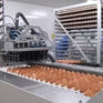 Trung Quốc: Ngành công nghiệp trứng gà đẩy mạnh đầu tư công nghệ cao