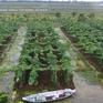 Chuyện nhà nông với nông nghiệp: Nông nghiệp Tiền Giang chuyển mình bằng đầu tư công nghệ cao