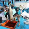 Kiên Giang phấn đấu trở thành tỉnh điểm về chống khai thác thủy sản bất hợp pháp