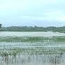 Hơn 67.000 ha lúa và hoa màu bị ngập úng