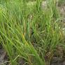 Kỷ luật nhiều cán bộ ở Hà Tĩnh sau vụ mất mùa diện rộng