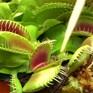 Triển lãm cây ăn thịt tại Colombia