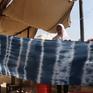Cây tràm - Nguyên liệu chính của nghề nhuộm vải truyền thống ở Jordan