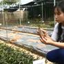 Chuyện nhà nông với nông nghiệp: Hiệu quả từ mô hình chuyển đổi