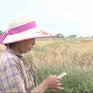 Nông dân Myanmar ứng dụng phần mềm trong canh tác