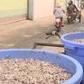 Nhà Trang: Khó di dời cơ sở sản xuất nước mắm ra khỏi thành phố