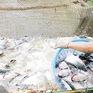 Tìm giải pháp nâng tầm cá tra Việt
