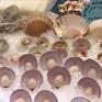TP.HCM: Khai mạc Hội chợ Vietfish lớn nhất 20 năm qua