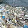 """Vì sao vịnh Xuân Đài đứng trước nguy cơ trở thành vùng """"biển chết""""?"""