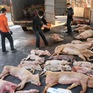 Diễn biến dịch tả lợn tại nhiều nước