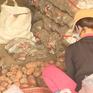 Vẫn còn khoai tây Trung Quốc tại chợ nông sản Đà Lạt