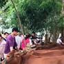 Ngân hàng bò và hoạt động từ thiện bền vững cho người nghèo