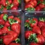 Điều tra động cơ của nghi phạm vụ cắm kim vào hoa quả