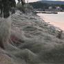 Kỳ lạ mạng nhện bao phủ thị trấn ở Hy Lạp