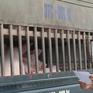 Các địa phương khẩn trương phòng chống dịch tả lợn châu Phi