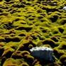 Hàng loạt rêu phong cổ tại Nam Cực biến mất do biến đổi khí hậu