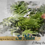 Chuyện nhà nông với nông nghiệp: Triển vọng phát triển cây sa nhân ở Phiêng Ban