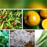 Hàng nông sản Việt Nam được chào bán trên Amazon với giá cao