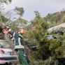 Giao thông ở nhiều nước tê liệt do bão Friederike