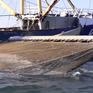 Châu Âu cấm đánh cá bằng xung điện