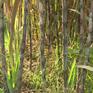 Giải pháp tháo gỡ khó khăn cho ngành mía đường trong nước